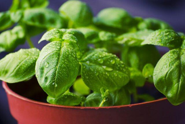 Własne uprawy, czyli wysiew warzyw w domu