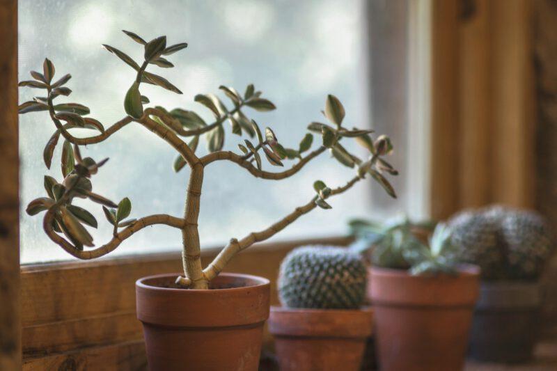 Duże rośliny jako ozdoba mieszkania